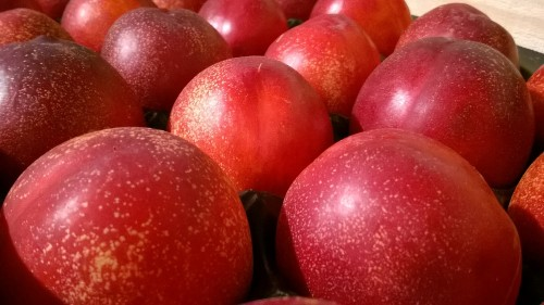 peches-nectarines-joumond-5