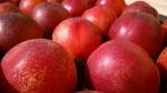 peches-nectarines-joumond-5