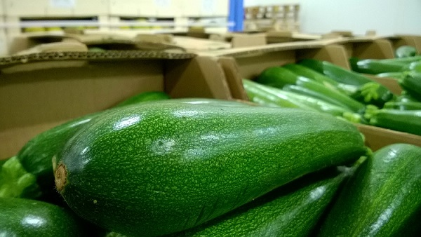 Photo produit Courgette