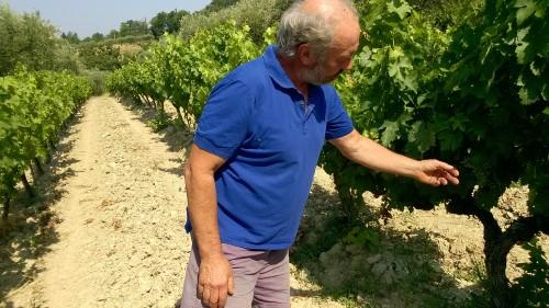 vignes-bouchet-19