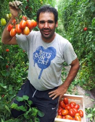 tomates-zrhiba-a-4